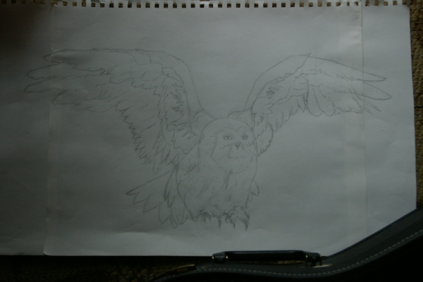 owlretry